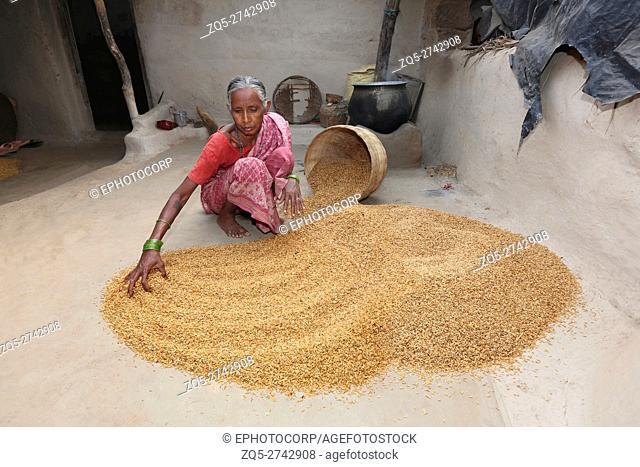 Tribal woman drying rice, SAWAR TRIBE, Khairmal Village, Saraipali Tahsil, Mahasamund District, Chattisgarh, India