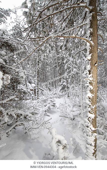 Goura village covered in snow. Goura, Corinthia, Peloponnese, Greece