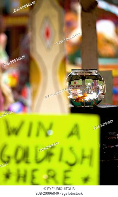 Findon village Sheep Fair Goldfish bowl on a fairground stall with a sign reading Win A Goldfish Here and people in the background inverted in the glass bowl
