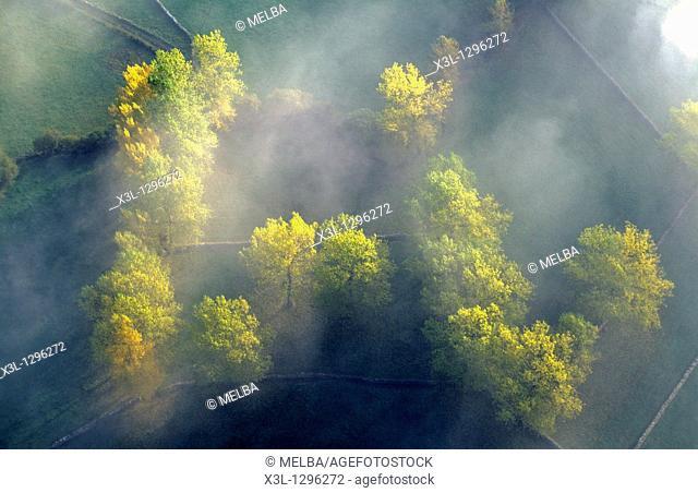 Forest  Espinosa de los Monteros  Burgos  Castile-Leon  Spain