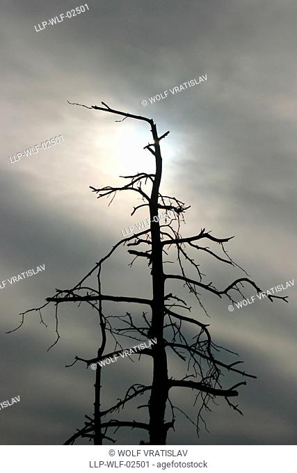 A Dead Tree Shot against the Sunlight