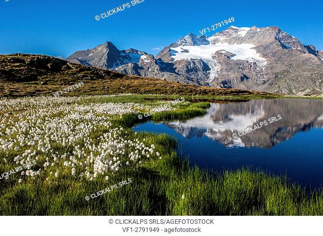 Switzerland, lake reflection from Bernina pass, in the background Cambrena peak