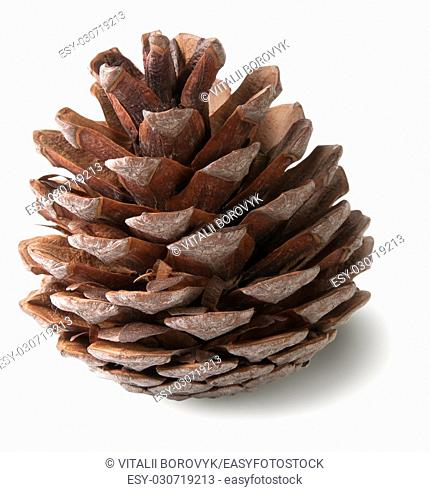 Juniper cone isolated on white background