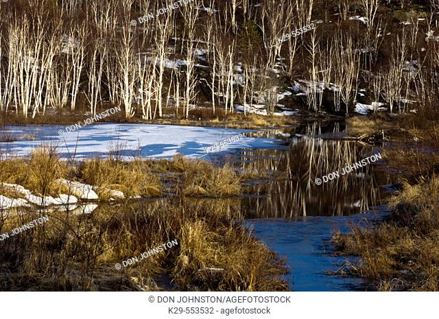 Water channel with ice open water and birch tree reflections. Sudbury, Ontario, Canada
