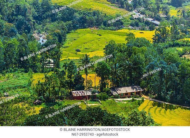 Rice terraces, Ramboda, Central Province, Sri Lanka