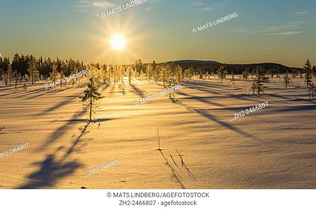 Winter landscape in direct light with frosty and snowy trees, Gällivare, Swedish Lapland, Sweden