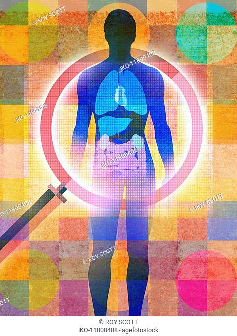 Magnifying glass examining male internal organs