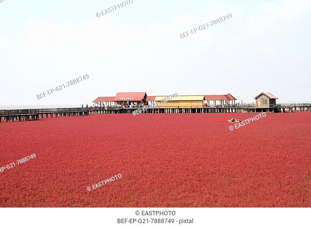 Scenery Class: Liaoning Panjin Red Beach Zhao circle and scenery