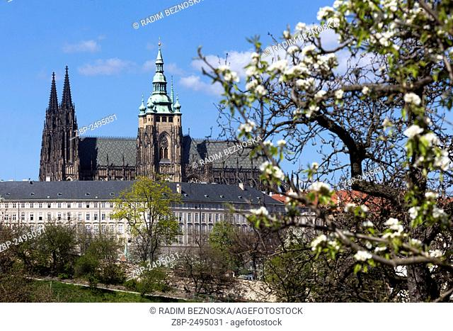 View of Prague Castle from Petrin hill blooming, Prague, Czech Republic