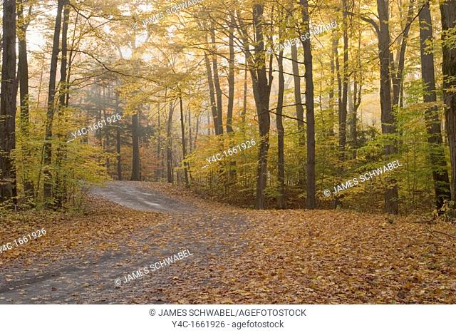 Road though fall woods with fog in Chestnut Ridge Park in Western New York State