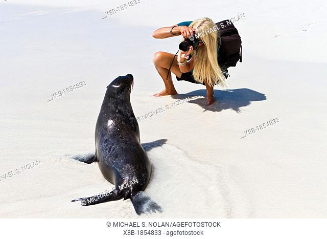 Galapagos sea lion pup Zalophus wollebaeki with photographer CT Ticknor on Gardner beach on Santiago Island in the Galapagos Island Archipelago