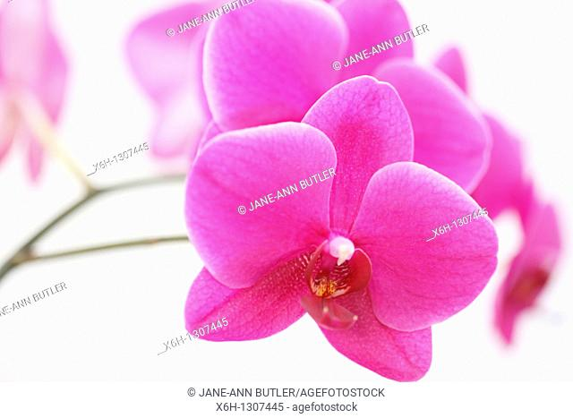 Exquisite Orchid for Someone Special