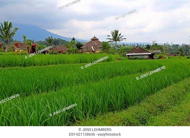 Reis Terrassen mit Hütten