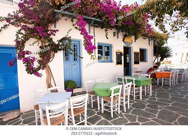 Woman sitting in an open-air cafe-restaurant or taverna decorated with bougainvilleas in the old town Chora, Folegandros, Cyclades Islands, Greek Islands