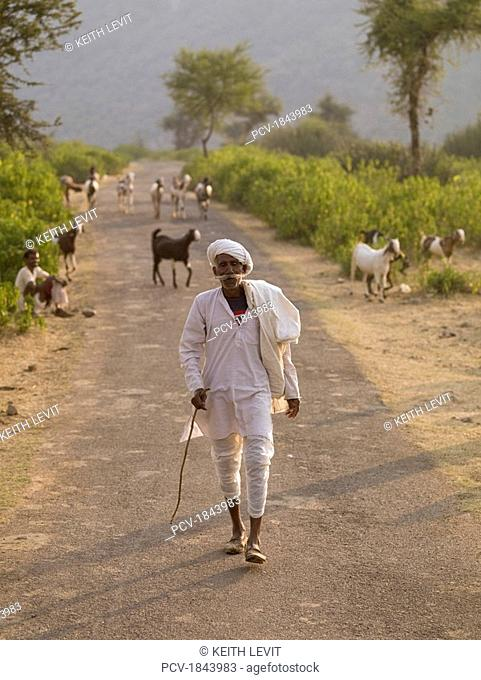 Aravalli Hills,Rajasthan,India,Senior man walking along rural road,with herd of goats behind him