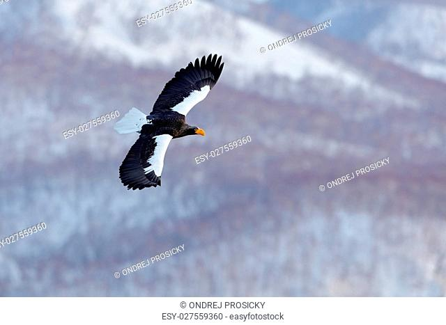 Winter scene with snow and eagle