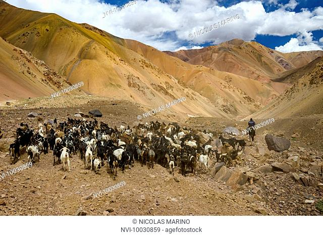 Goat herds and herder in the high Andes, Agua Negra pass, Chile-Argentina