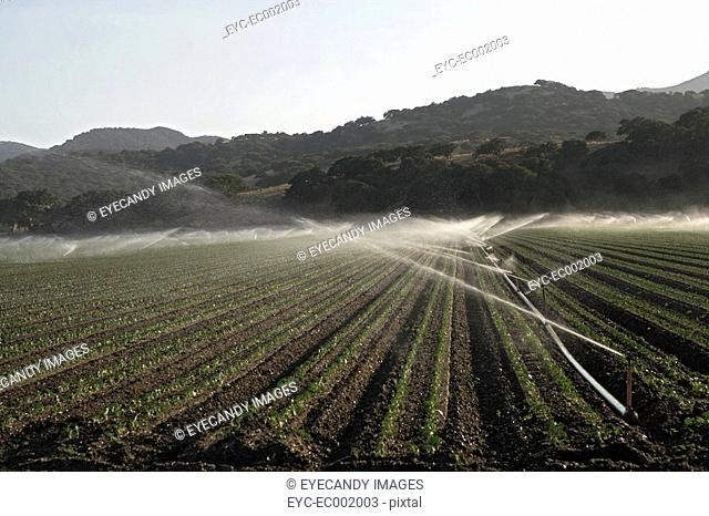 View of sprinklers on an agriculture land