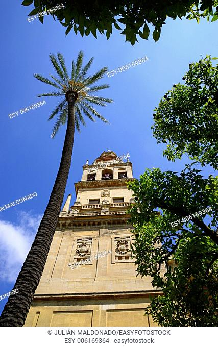 Patio de los Naranjos and the tower of the Cathedral of Cordoba, Andalucía, Spain