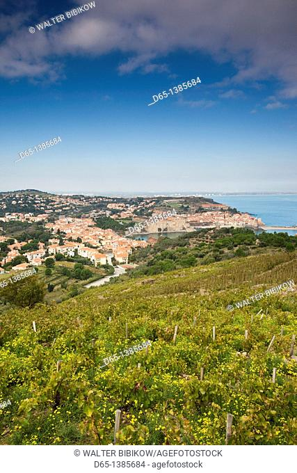 France, Languedoc-Roussillon, Pyrennes-Orientales Department, Vermillion Coast Area, Collioure, town overview with vineyards