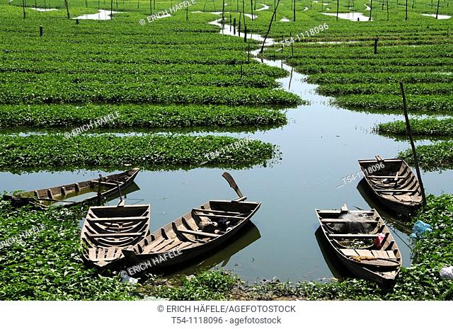 Boats on a Seagrassfield