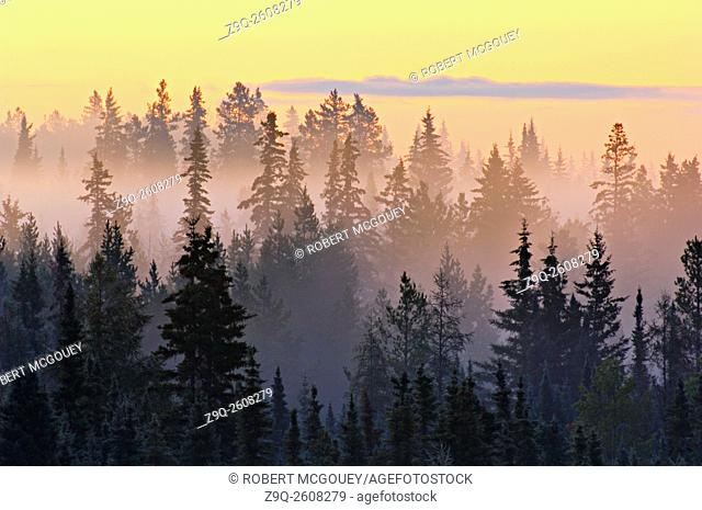 A morning sunrise backlighting the mist amongst the trees in rural Alberta, Canada