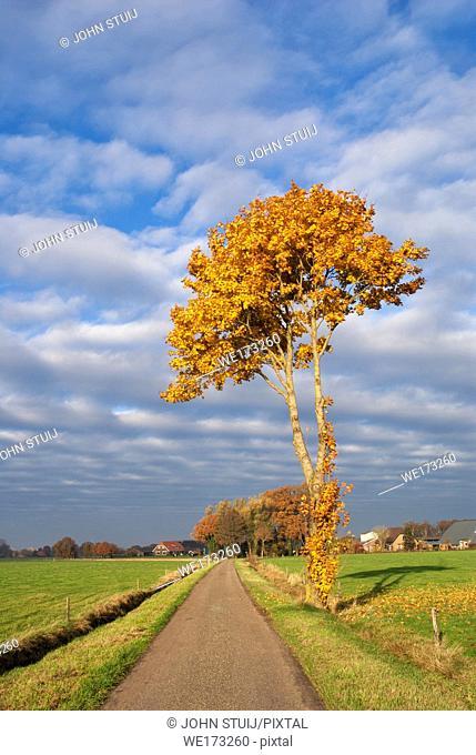 Autumn coloured tree near Terschuur in the Dutch province Gelderland