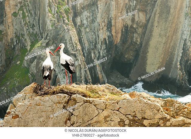 Pair of white storks (Ciconia ciconia) on nest. Parque Natural do SW Alentejano e Costa Vicentina, Algarve, Portugal