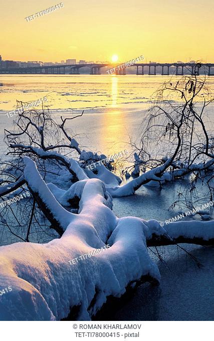 Snow on fallen tree at sunset