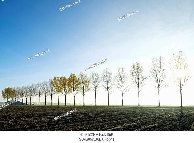 Tress in a row, Dordrecht, Zuid-Holland, Netherlands