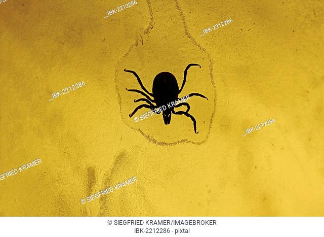 Castor bean tick (Ixodes ricinus), Germany, Europe