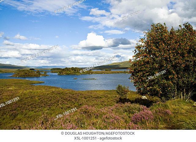 RANNOCH MOOR ARGYLL Loch Ba moorland heather Rowan tree heathland landscape