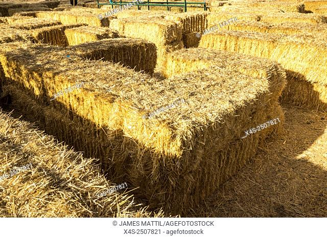Bales of hay form a maze for children at a California farm
