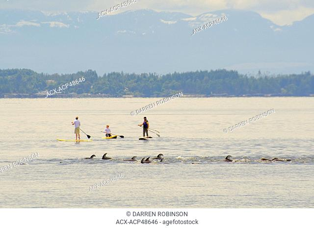 Longboarders watch as a pod of white-sided Pacific dolphins swim past them off Willingdon Beach in Powell River, on British Columbia's Sunshine Coast