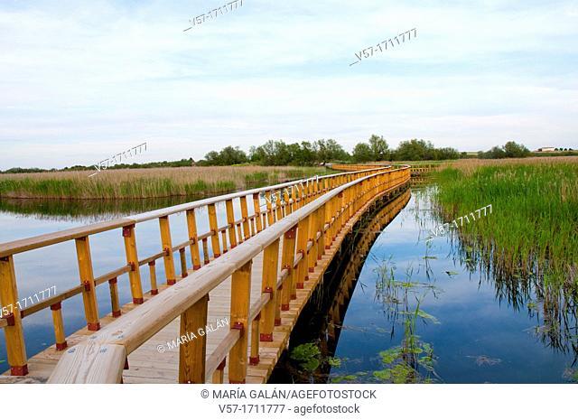 Catwalk. Tablas de Daimiel National Park, Ciudad Real province, Castilla La Mancha, Spain
