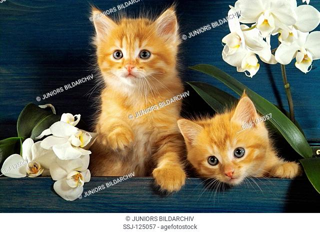 two kittens between orchids