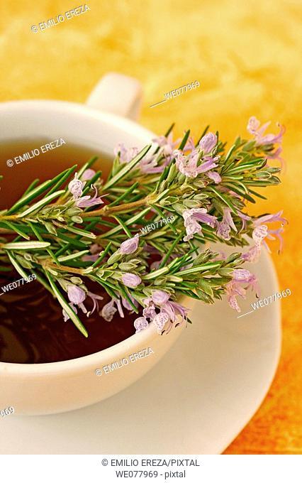 Rosemary (Rosmarinus officinalis) infusion