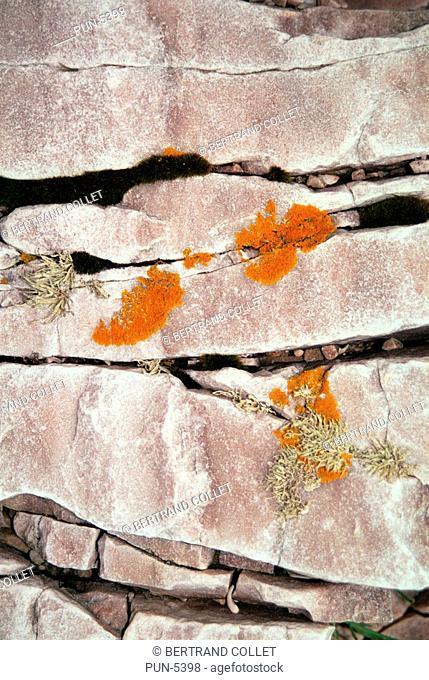 Lichen and granite along the North sea cost