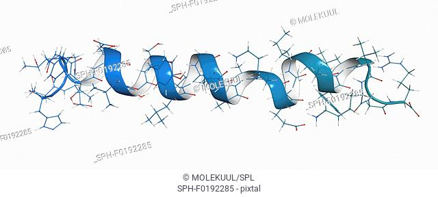 Glucagon-like peptide 1 molecule, illustration