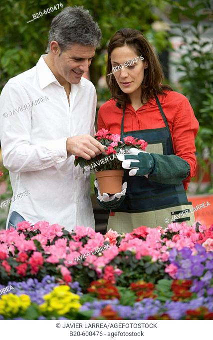 Gardeners, Azalea, Garden, Tree nursery. Gipuzkoa, Euskadi. Spain