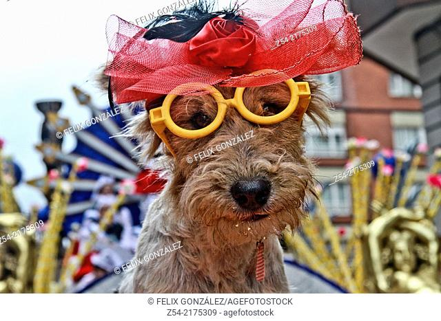 Dog with glasses and head-dress