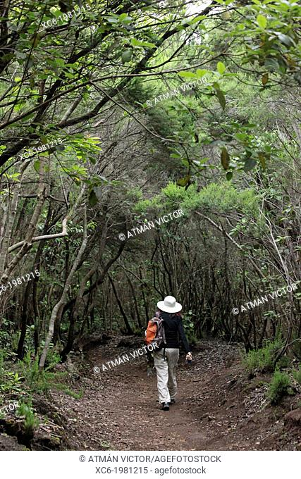 adult woman walking alone in the forest of Agua Garcia Tenerife island