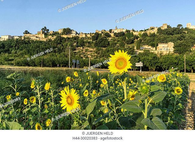 France, Alpes-de-Haute-Provence, Luberon, vineyard near Menerbes, labelled Les Plus Beaux Villages de France, The Most Beautiful Villages of France, France