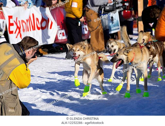 The official Iditarod photographer, Jeff Schultz, photographing lead dogs during the restart at the 2014 Iditarod, Willow, Southcentral Alaska
