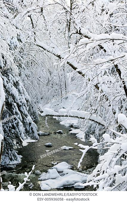 Snow covered trees over Goldbrook Stream in the middle of winter, Stowe, Vermont, USA
