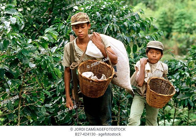 Young coffee pickers. Jalapa, Nicaragua