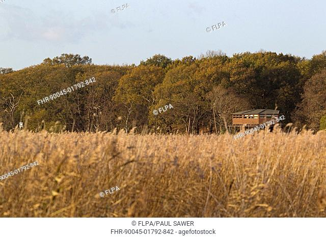 View across reedbed towards Bittern Hide, Minsmere RSPB Reserve, Suffolk, England, november