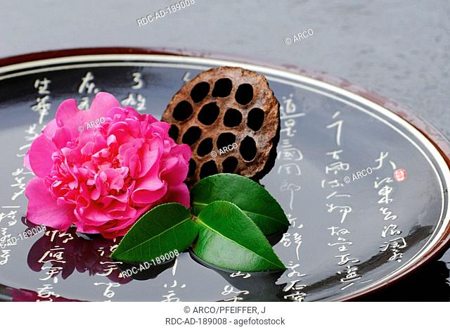 Camellia in bowl, japanese characters, Camellia japonica