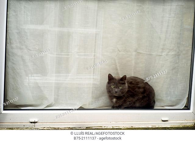 Cat looking into the street behind a window. England, UK, Europe