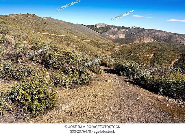 Track in the Ladero de Calzones. Sierra Norte. Patones. Madrid. Spain. Europe